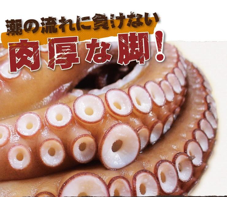 関門海峡ダコは急流に鍛え抜かれた肉厚な足