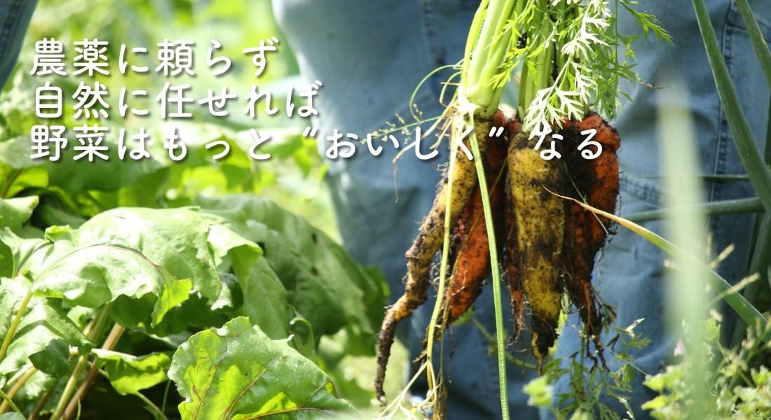 農薬に頼らない野菜作り
