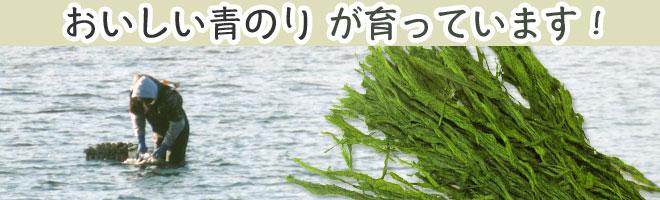 青のり原藻