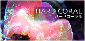 サンゴ ハードコーラル