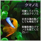 海水魚 クマノミ