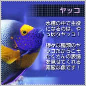 海水魚 ヤッコ
