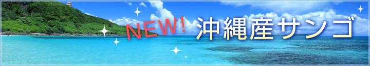 沖縄産ソフトコーラル・サンゴ