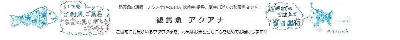 観賞魚アクアナ[AquanA]は兵庫 伊丹、武庫川近くの熱帯魚店です