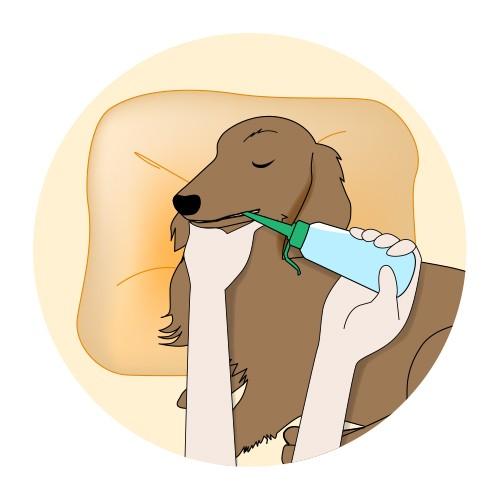 ペットの水素水は緊急配送も送料無料