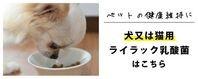 ライラック乳酸菌(犬猫用)