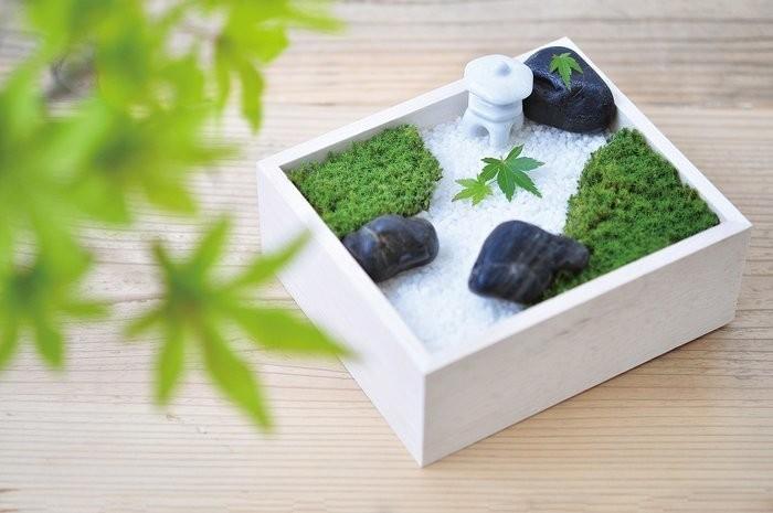 苔庭園栽培セット