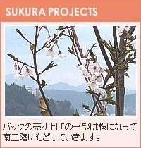 バッグの売上の一部は桜になって南三陸に戻ってきます。