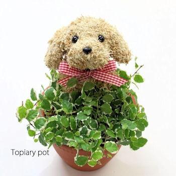 動物トピアリー 鉢植え