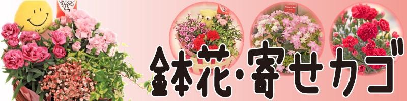 鉢花・寄せカゴ