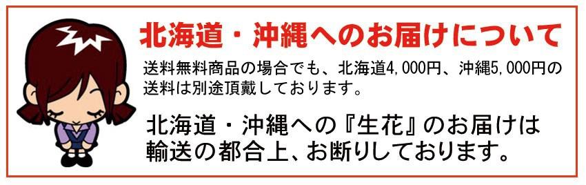 沖縄・北海道は送料別