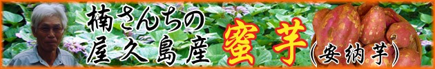 屋久島産安納芋