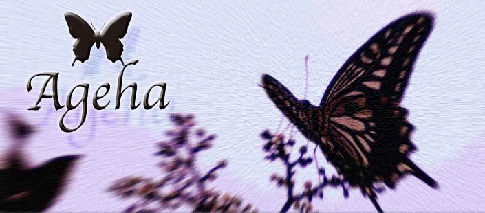Ageha/アゲハ