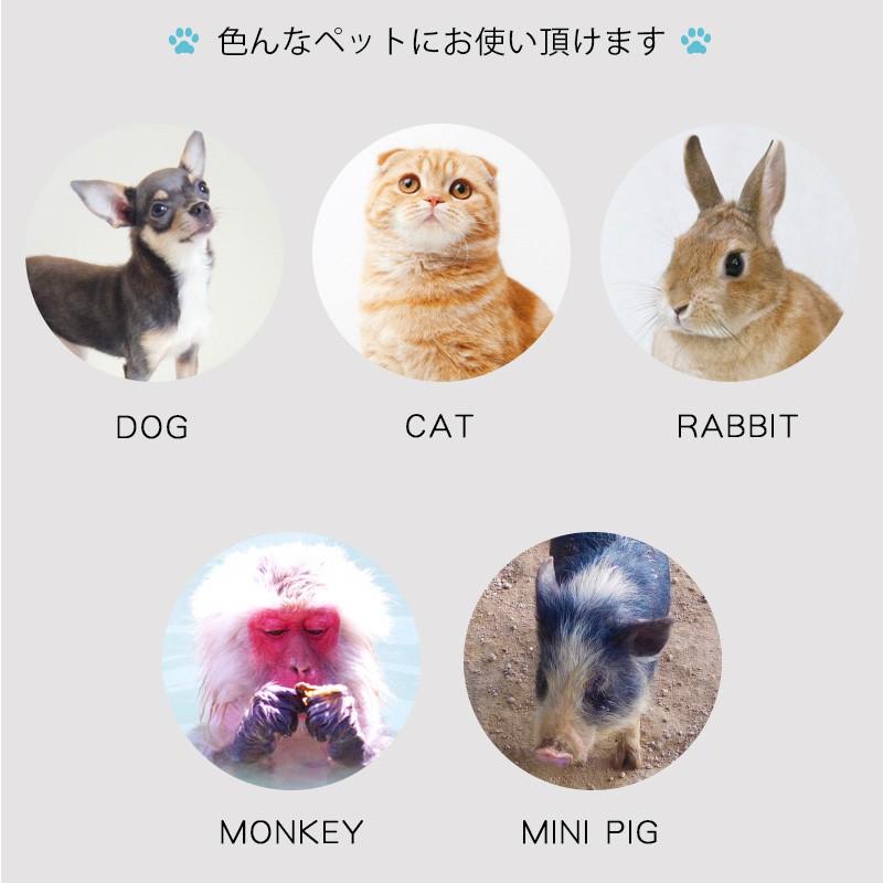 ペット用ミニヘルメット