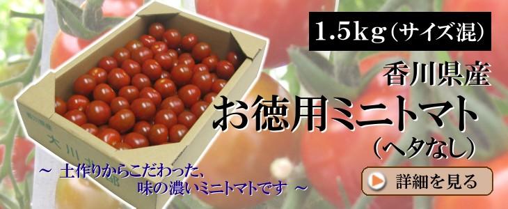【約1.5kg入】お徳用ミニトマト