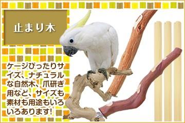 【止まり木】ケージピッタリサイズ、自然木、爪研ぎ用などサイズも素材も用途もいろいろ!