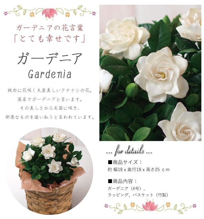 母の日プレゼント・ガーデニア