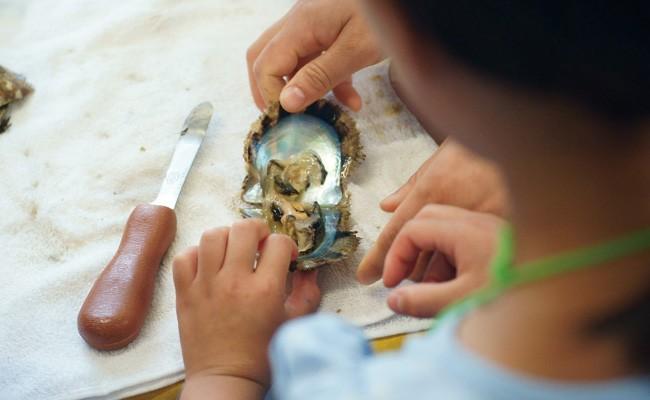 あこや真珠取り出し体験&真珠のアクセサリー作り