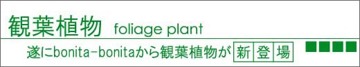 観葉植物ショッピング