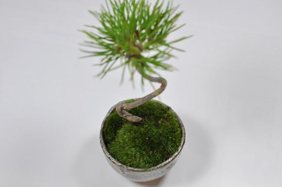 ふわっふわの苔