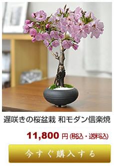 遅咲き桜 竹