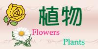 お花・フラワー・植物アクセサリー