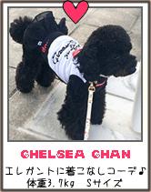 トイプードルの犬服