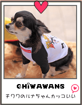 チワワの犬服