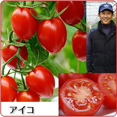 こだわりのミニトマト あいこ(アイコ)