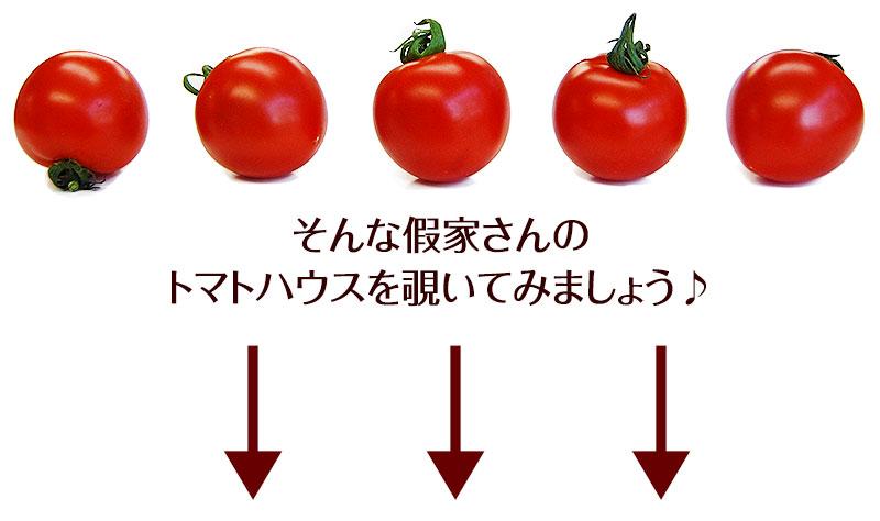 トマトハウスに行ってみよう!