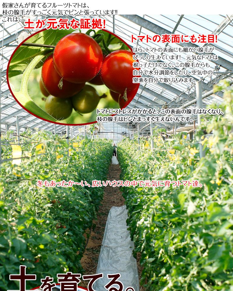 健康な土で育つフルーツトマトは本当に美味しい!