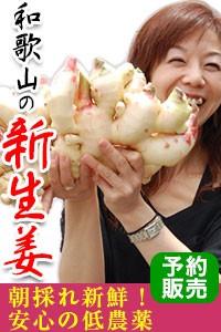 朝採れ新鮮!安心の低農薬栽培!和歌山の新生姜