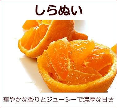 ジューシー果汁で濃厚な味わい高知県産【しらぬい(デコポン)】