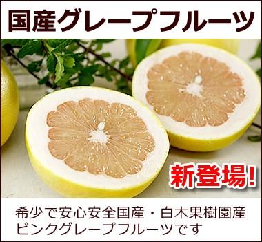 希少な白木果樹園産(国産)【グレープフルーツ】