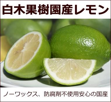 安心安全国産レモン【白木果樹園産レモン】