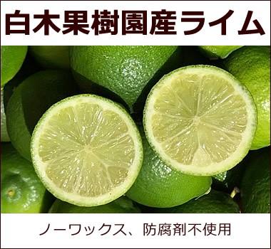 国産・白木果樹園産 フレッシュな香りいっぱい【ライム】