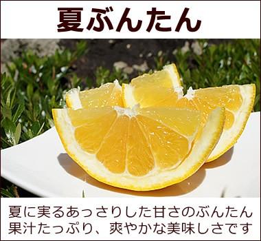 あっさりとした味わいの果汁たっぷり【夏ぶんたん】