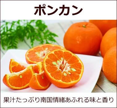 エキゾチックな味わいと香り、高知県産【ポンカン】