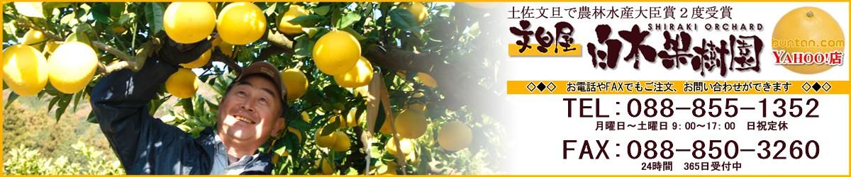 南国高知の特産品果物・土佐文旦(とさぶんたん、トサブンタン)で農林水産大臣賞を2度受賞