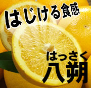 和歌山県有田産 はっさく八朔