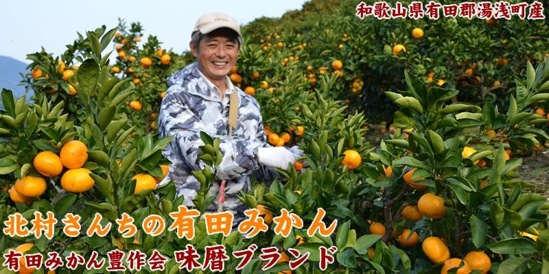 有田みかん豊作会 北村一雄さんの有田みかん
