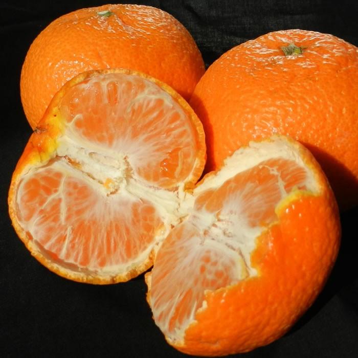津之輝・つのかがやき・春みかん・柑橘