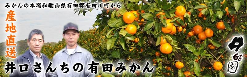 井好園・井口さんちの有田みかん