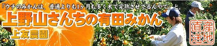 上友農園・上野山さんちの有田みかん