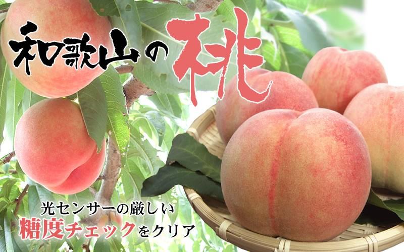 JAながみね高津選果場から 和歌山の桃 光センサーの厳しい糖度チェックをクリア