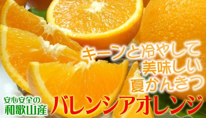 バレンシアオレンジ和歌山産