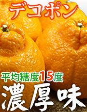豊作会・北村一雄さんのデコポン和歌山県産