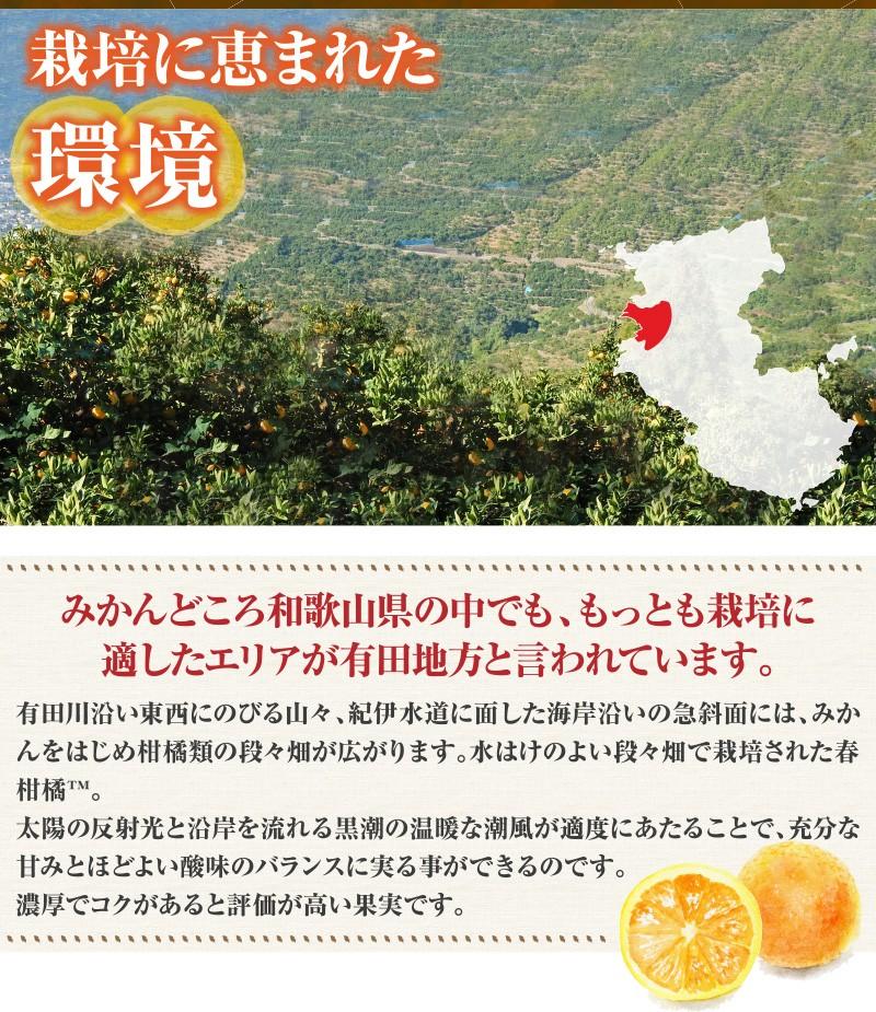 清見オレンジ栽培環境
