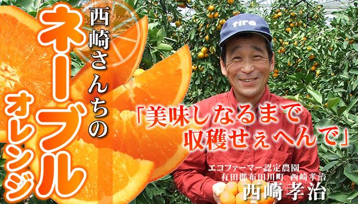 西崎さんちのネーブルオレンジ