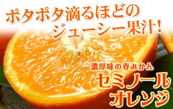 セミノールオレンジ春みかん